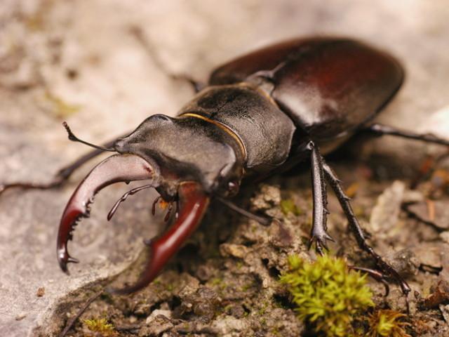 Znalezione obrazy dla zapytania owady
